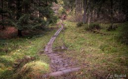 Na niebieskim szlaku granicznym Krawców Wierch - Trzy Kopce (okolice przełęczy Bory Orawskie)
