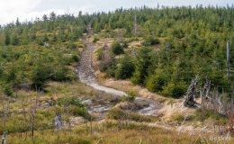 Czerwony szlak z Magurki Wiślańskiej na Magurkę Radziechowską