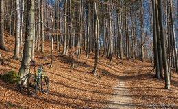 Leśna droga znad Oczkowa na Przełęcz Cisową