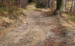 Na zielonym szlaku z Gibasów na Ścieszków Groń