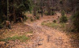 Leśny zjazd z Przykrzycy do Okrajnika