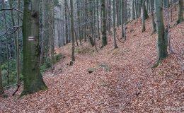 Czewony szlak powyżej Węgierskiej Górki