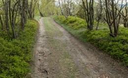 Zjazd z Porębskiego Gronia do szlaku na Przełęcz Targanicką