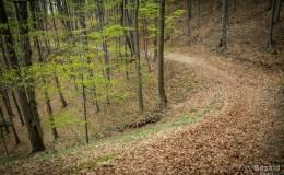 Zielony szlak z  Przełęczy Targanickiej na Przełęcz Kocierską