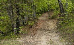 Szlak za Przełęczą Płonna