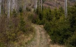 Czerwony szlak pomiędzy Kocierzem na Przełęczą Przysłop Cisowy