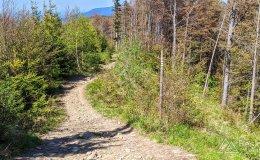 Czerwony szlak ze Skrzycznego do Buczkowic