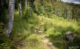 Górny odcinek niebieskiego szlaku ze Złatnej na Halę Lipowską