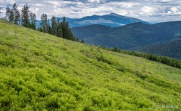 Babia Góra z żółtego szlaku na Romankę