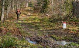 Niebieski szlak graniczny na Grubą Buczynę