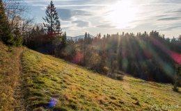 Leśny singiel/trail z Hali Cukiernicy na Zapolankę