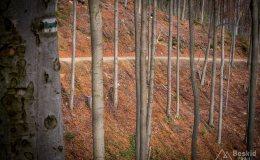 Początek zielonego szlaku z Węgierskiej Górki do Złatnej