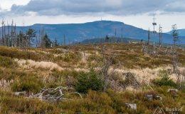 Widok spod Baraniej Góry na północ (Skrzyczne)