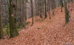 Czerwony szlak z Glinnego do Węgierskiej Górki (środkowy odcinek)