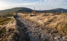 Na czerwonym szlaku pomiędzy Magurką Wiślańską a Radziechowską