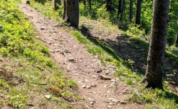 Czerwony szlak pomiędzy Przełęczą Karkoszczonka a Hyrcą