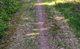 Ścieżka rowerowa wokół Skalitego