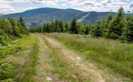 Podjazd przez Halę Łyśniewską na Przełęcz Pawlusią