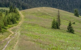 Przełęcz Pawlusia