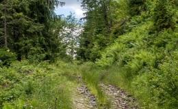 Stary szlak nordic walking, który łączy się z wyżej położoną główną stokówką
