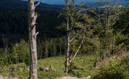 Górny odcinek niebieskiego szlaku ze Złatnej na Halę Lipowską (przełamanie)