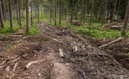 Górny odcinek niebieskiego szlaku ze Złatnej na Halę Lipowską - pozostałości po pracach leśnych (wiosna 2020)