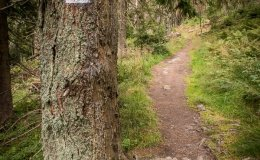 Czerwony szlak z Rycerzowej do Rycerki Dolnej