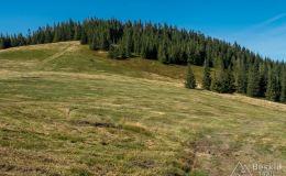 Na zielonym szlaku z Sopotni na Halę Miziową