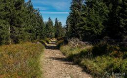 Na czerwonym  szlaku pomiędzy Halą Miziową a Trzema Kopcami