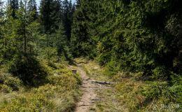 Na niebieskim szlaku z Trzech Kopców na Przełęcz Bory Orawskie