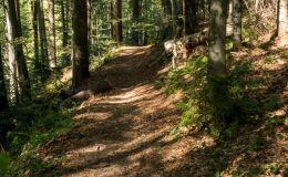 Na łączniku z Przełęczy Bory Orawskie do czarnego szlaku na Rysiankę