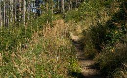 Na zielonym szlaku z Hali Lipowskiej na Halę Boraczą
