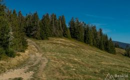 Na żółtym szlaku z Hali Redykalnej na Halę Lipowską