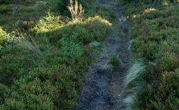 Singiel biegnący obok szlaku z Hali Rysianka w kierunku Hali Pawlusiej