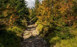 Na czerwonym szlaku z Hali Radziechowskiej na Magurkę Radziechowską