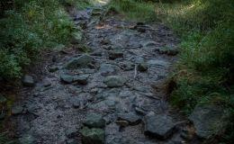 Górny fragment zielonego szlaku z Magurki Radziechowskiej do Ostrego