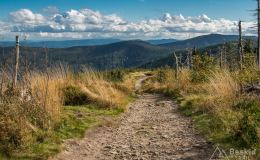 Na zielonym szlaku na Malinowską Skałę
