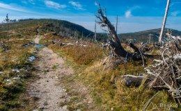 Czerwony szlak z Magurki Wiślańskiej w kierunki Magurki Radziechowskiej