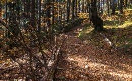 Zielony szlak do Targoszowa