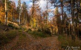 Na niebieskim szlaku na  Jaworzynę