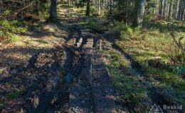 Na szlaku pomiędzy Rysianką a Trzema Kopcami