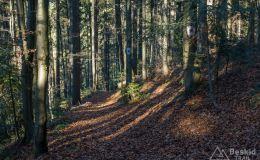 Okolice Borów Orawskich - skrót do żółtego szlaku