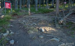 Na zielonym szlaku z Lipowskiej na Halę Boraczą