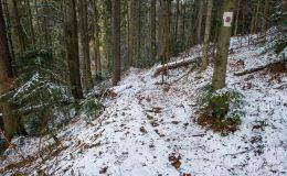 Łącznik pomiędzy Przełęczą Bory Orawskie a czarnym szlakiem na Halę Rysianka