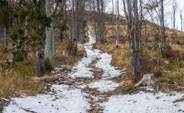 Podjazd żółtym szlakiem pod Halę Lipowską