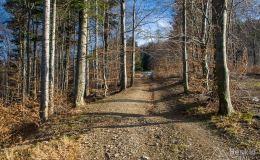 Bezszlakowy podjazd leśną drogą na grzbiet pod Jaworzyną