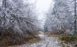 Czerwony szlak z Wielkiej Raczy na Przełęcz Przegibek