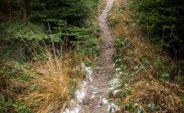Zielony szlak z Przełęczy Przegibek do Rycerki dol.  Rycerek