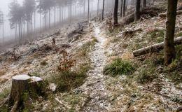 Trawers czerwonym szlakiem pod Bendoszką Wielką
