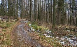Czerwony szlak w okolicy Przełęczy u Panienki